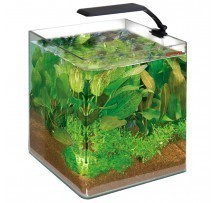Wave Box Cubo 25 Orion Led Acquario 25x25x30h Cm 16.5 Litri Completo